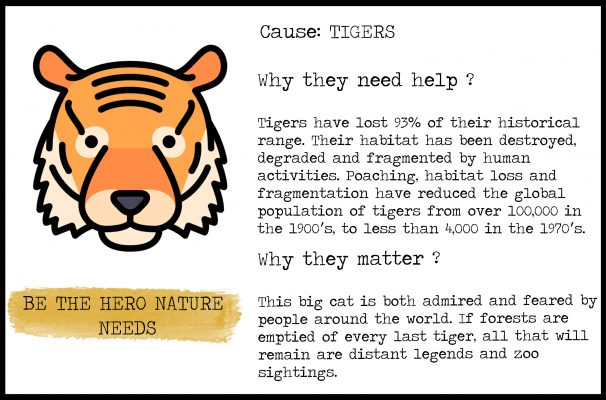 card tiger endangered specie animal