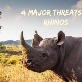 rhino threats endangered support